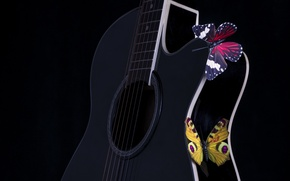 Picture butterfly, music, guitar