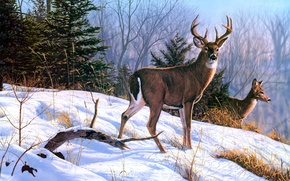 Picture winter, animals, snow, spruce, painting, deer, On the Ridge, Bruce Miller