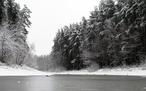 Picture winter, forest, snow, nature, pond, pine