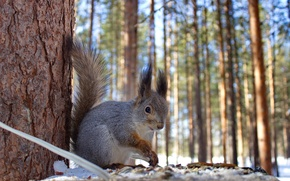 Wallpaper winter, forest, animals, nature, protein, squirrel, feeder