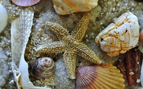 Picture sand, sea, star, the bottom, sink, shell