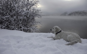 Picture snow, river, each, dog