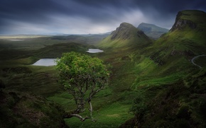 Picture stones, tree, rocks, island, mountain, Scotland, Skye