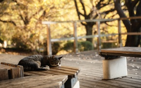 Picture cat, cat, bench, sleeping, lies, bench