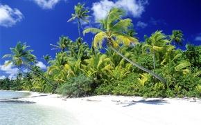 Wallpaper Palm trees, shore, tropics, clouds