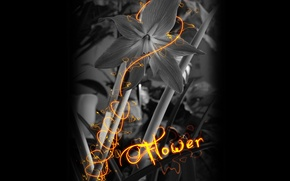 Wallpaper flower, black and white, electro