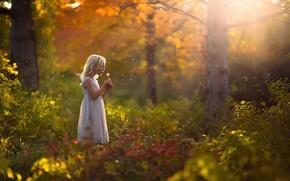 Picture autumn, forest, dandelion, dress, girl