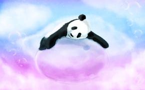 Wallpaper bubbles, blue, bear, pink, Panda, sleeping, bubble, lying