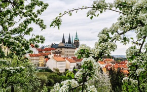 Picture flowers, branches, the city, spring, Prague, Czech Republic