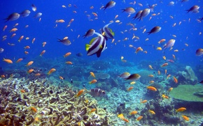Picture fish, corals, underwater world, reef and fish