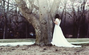 Picture girl, tree, roses, wedding dress