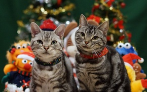 Picture holiday, cats, Christmas, pair
