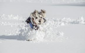 Picture winter, look, snow, each, dog