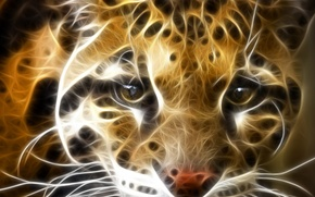 Wallpaper animals, cats, predators