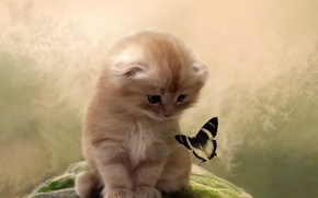 Wallpaper cat, kitty, background, butterfly, attention