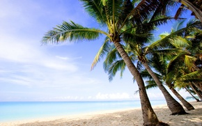 Wallpaper palm trees, water, landscapes, summer, trees, beach, sand