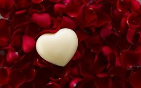Wallpaper heart, Valentine's Day, love, roses, romantic, petals, love, heart