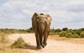 Picture Road, Elephant, Animals