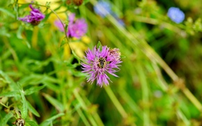 Wallpaper minimalism, background, plants, insect, nature, Flower, bee