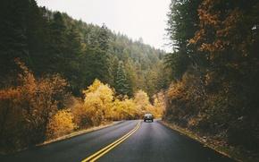 Picture road, machine, autumn, track