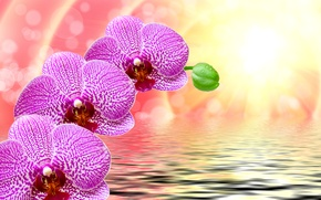 Wallpaper flowers, rays, background, purple, closeup, bokeh, water, ruffle, the sun, glare, orchids, drops