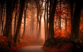 Picture road, autumn, forest, leaves, trees, fog, branch