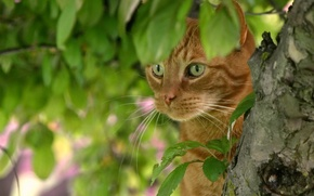 Picture cat, face, leaves, tree, red