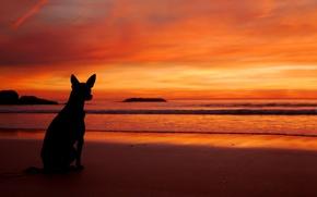 Picture sea, beach, sunset, dog, silhouette