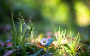 Picture flower, grass, macro, nature, plants