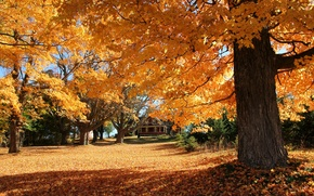 Picture autumn, leaves, trees, house, slope, yard