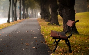Picture the city, street, Autumn bench