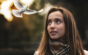 Picture girl, dove, flight