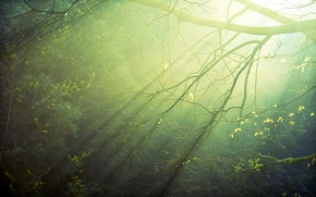 Picture forest, the sun, rays, light, sunrise, morning