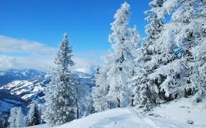 Picture winter, forest, snow, nature, Austria