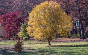 Picture autumn, leaves, trees, USA, Il, the crimson, Do Paige