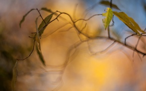 Picture leaves, macro, trees, yellow, background, tree, Wallpaper, blur, branch, leaf, wallpaper, leaves, widescreen, background, bokeh, …