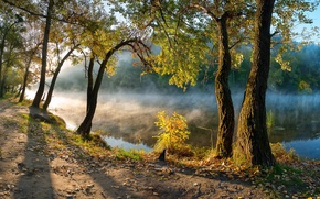Picture autumn, leaves, trees, river, morning, Ukraine, Donbass, Seversky Donets, Svyatogorsk