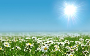 Picture field, the sun, flowers, nature, glade, landscapes, field
