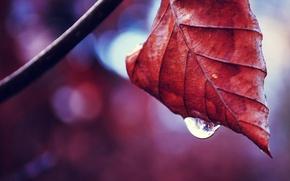Picture nature, macro, leaf