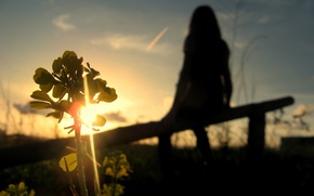 Wallpaper Sunset, the sky, silhouette, plant