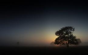 Wallpaper Tree, morning, fog