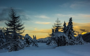 Picture trees, sunset, winter, mountains, snow