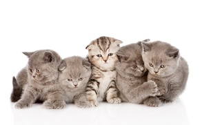 Picture cats, kittens, kids