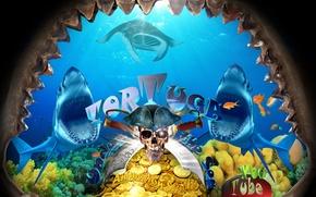 Picture sea, the sky, Islands, fish, jaw, skull, the bottom, shark, pirates, SKAT, treasure, treasures, under …