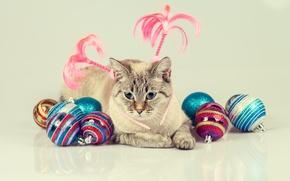 Picture cat, cat, balls, toys