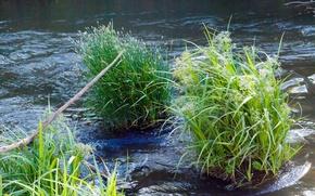 Picture nature, pond, river, river