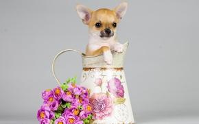 Picture flowers, dog, bouquet, puppy, pitcher