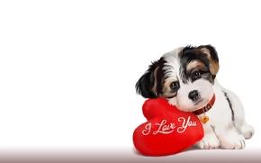 Picture mood, art, puppy, pillow, the word, children's, lorri kajenn the