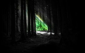 Picture forest, strips, night, earth, earth
