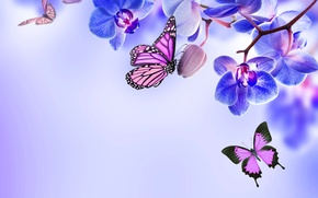 Picture flowers, flowers, butterflies, orchid, blue, butterfly, Orchid, beautiful